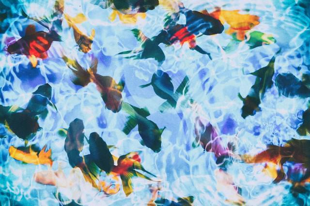 波紋と金魚(フォトモンタージュ)の写真