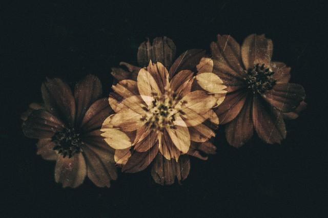 朽ちる花の写真