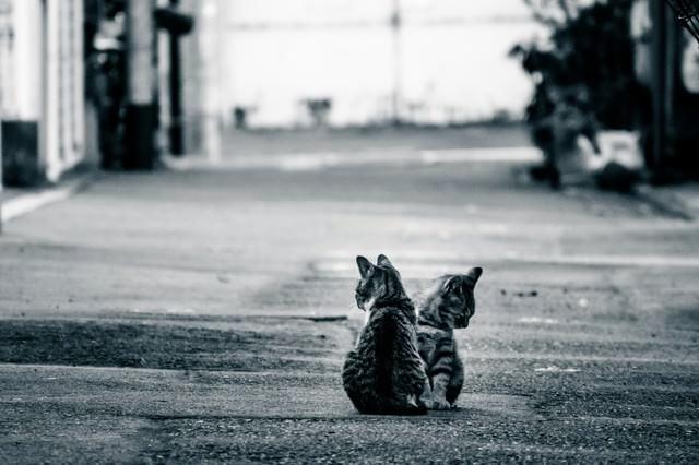 アルファルトと猫二匹の写真