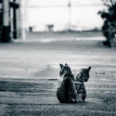 「アルファルトと猫二匹」の写真素材
