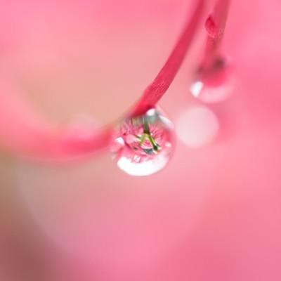 「水滴」の写真素材