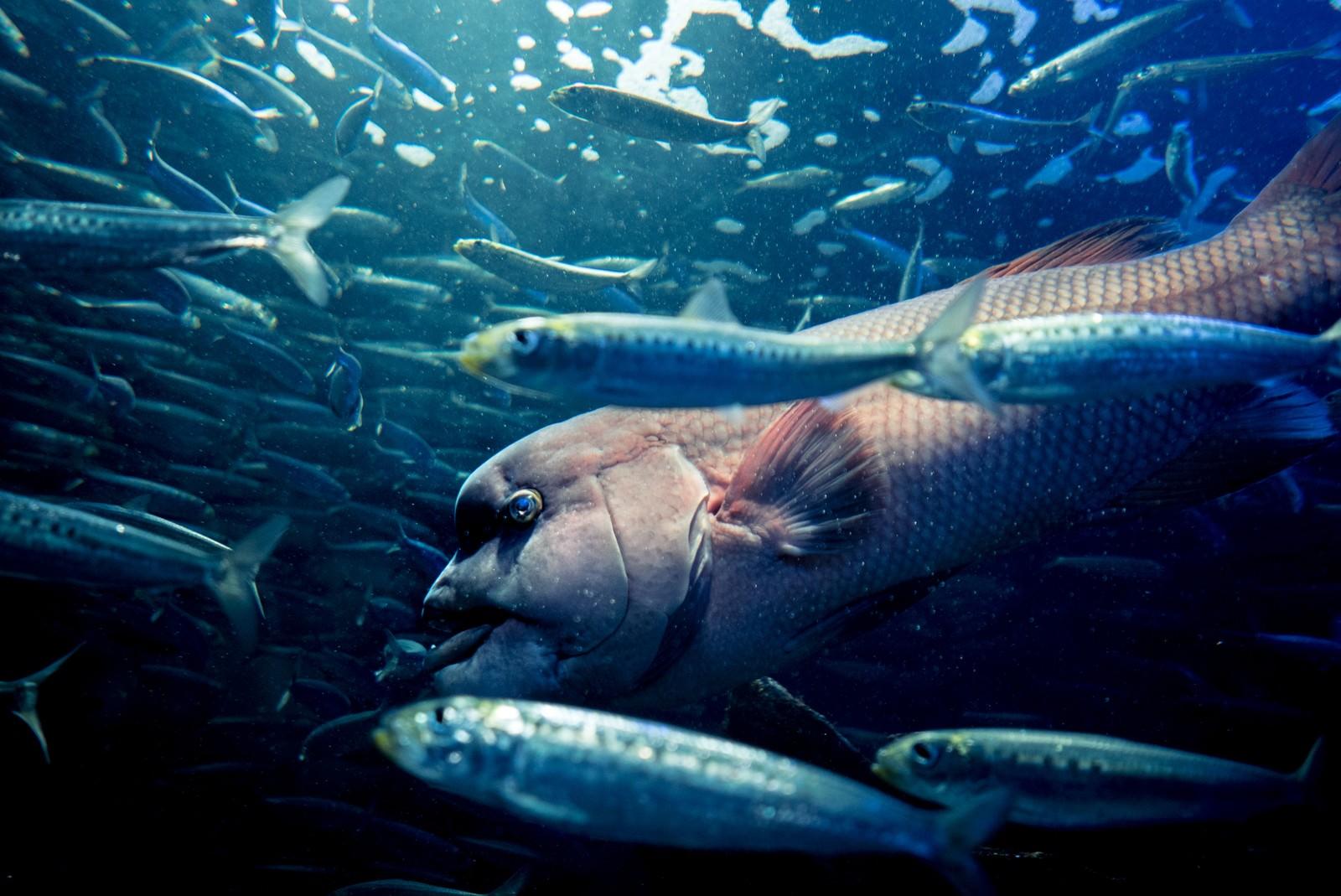 「魚群の中」の写真