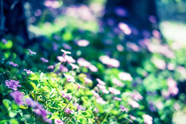 路傍の花の写真