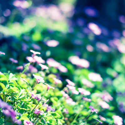「路傍の花」の写真素材