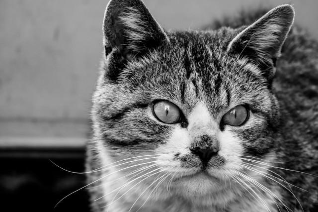 何かを見てしまった猫の写真
