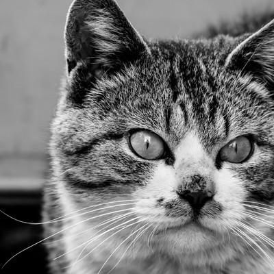 「何かを見てしまった猫」の写真素材