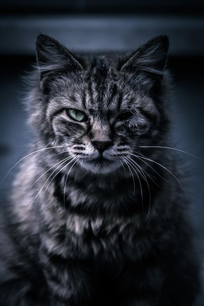 「ゴロツキ猫」の写真