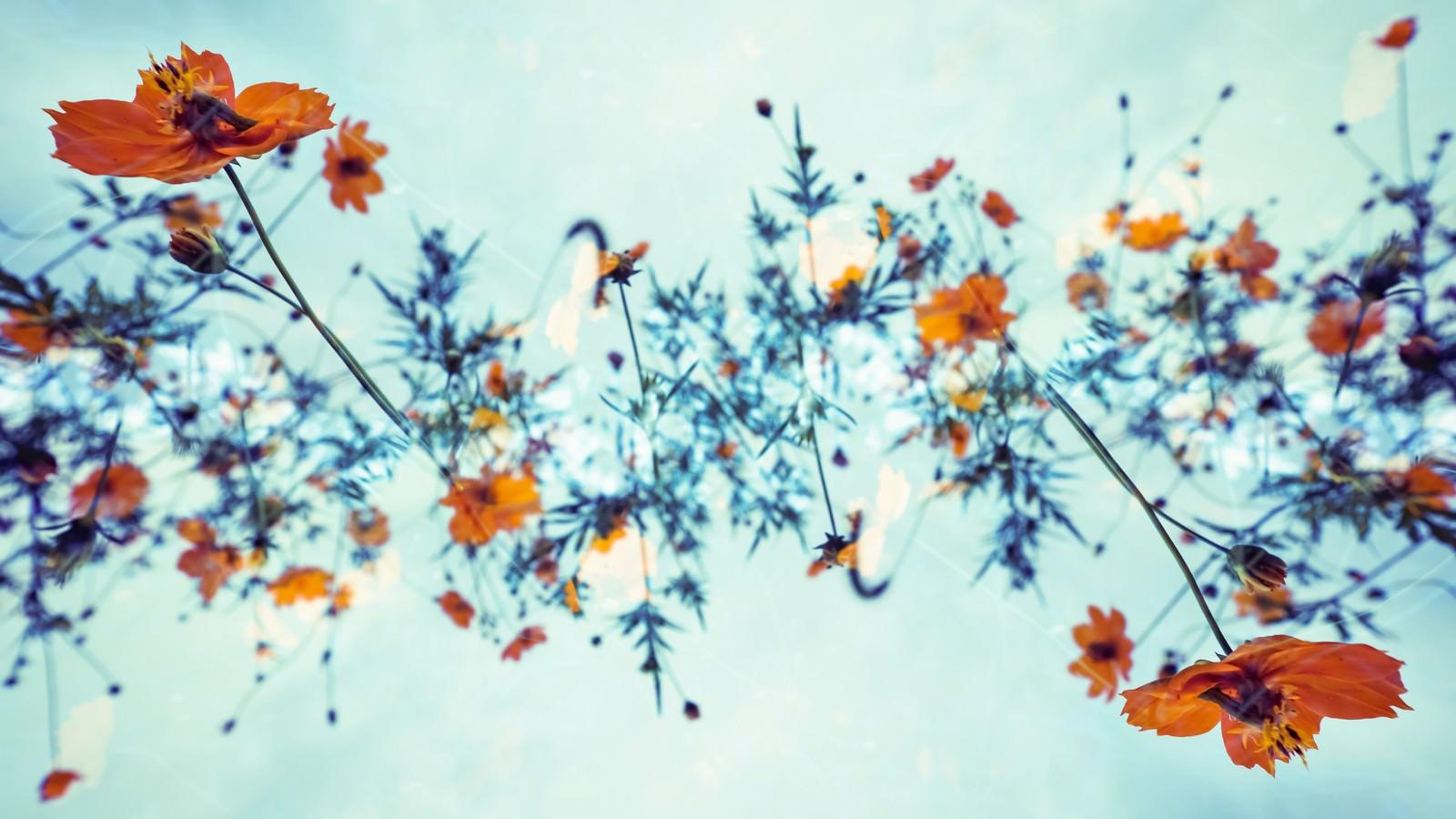 「秋桜の螺旋」の写真