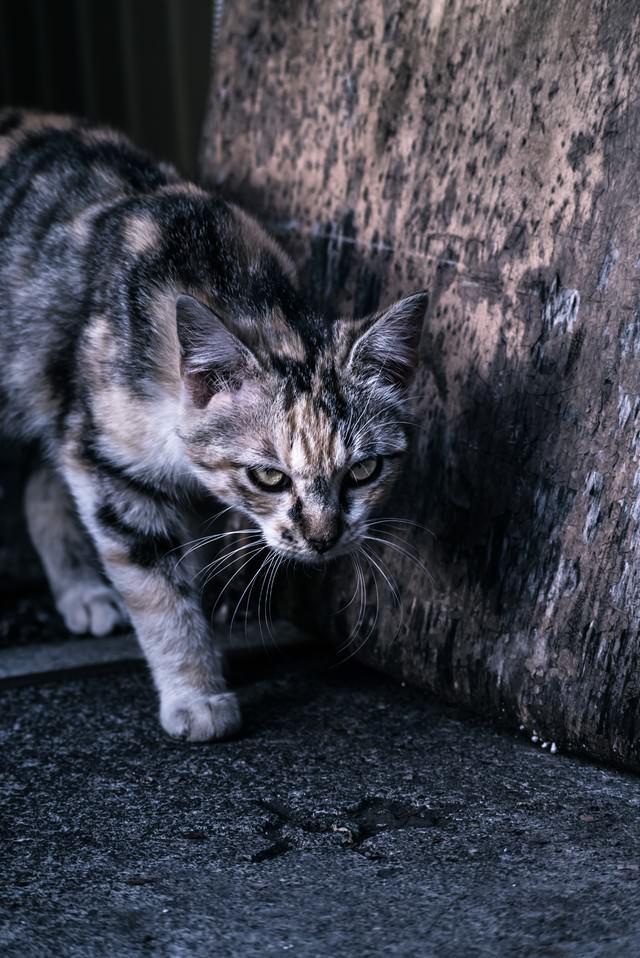 縄張りを意識する猫の写真