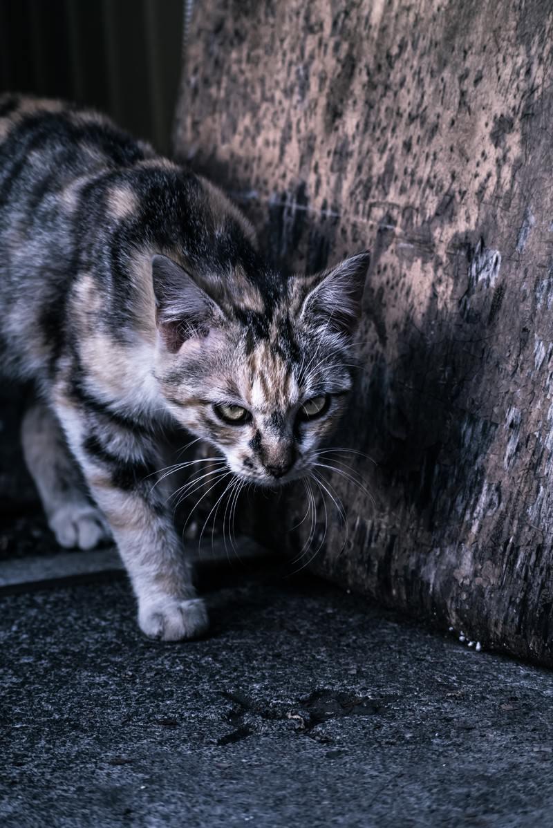 「縄張りを意識する猫」の写真