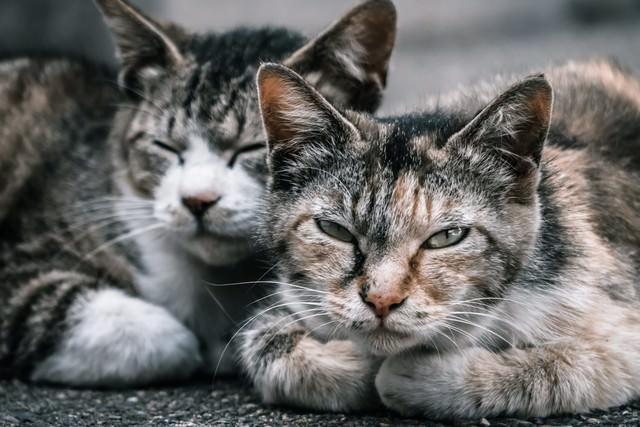 2匹の野良猫の写真