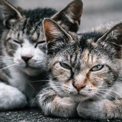 「2匹の野良猫」の写真素材