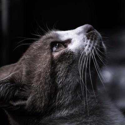 天井を見つめる猫の写真