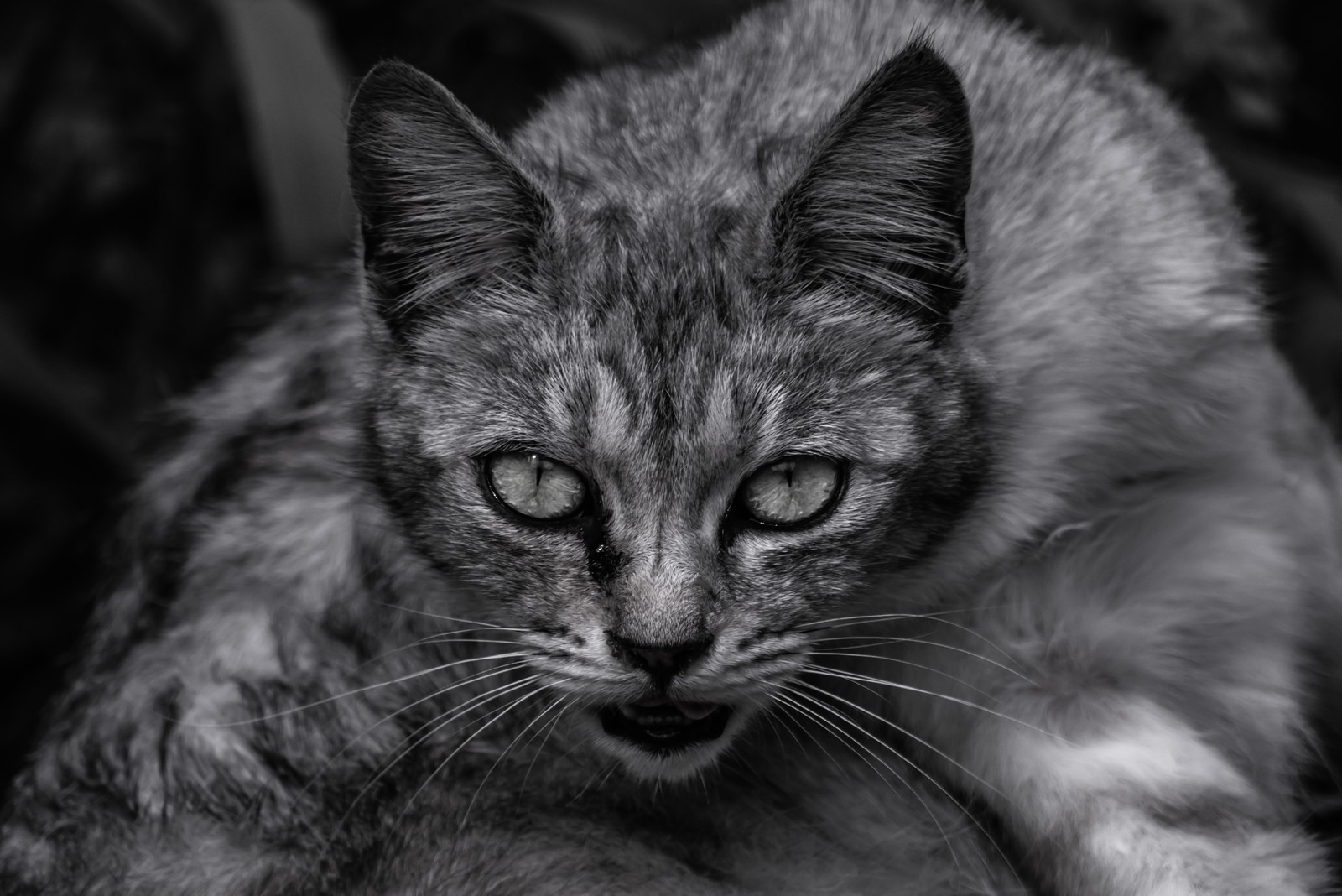 「呪猫呪猫」のフリー写真素材を拡大
