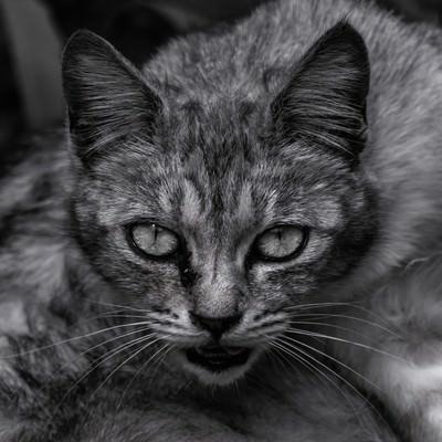 「呪猫」の写真素材