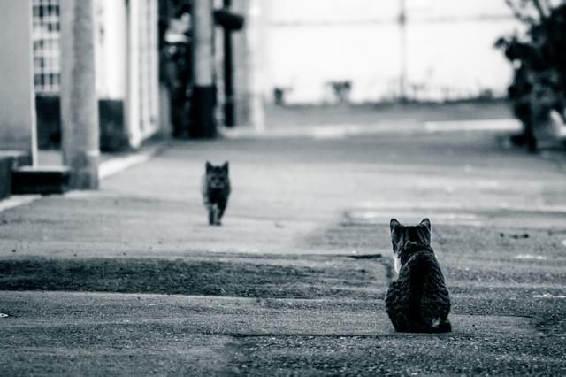 夫の帰りを待つ猫の写真