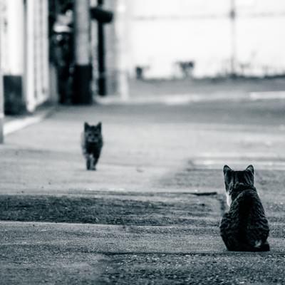 「夫の帰りを待つ猫」の写真素材