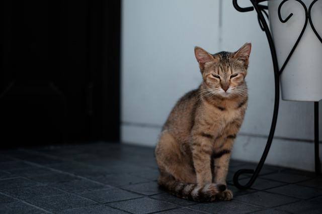 目を細める家猫の写真