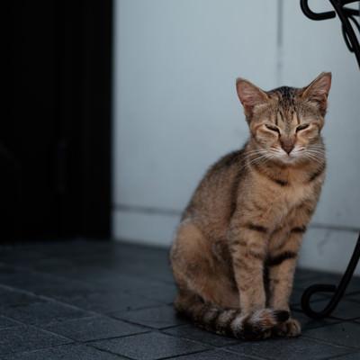 「目を細める家猫」の写真素材