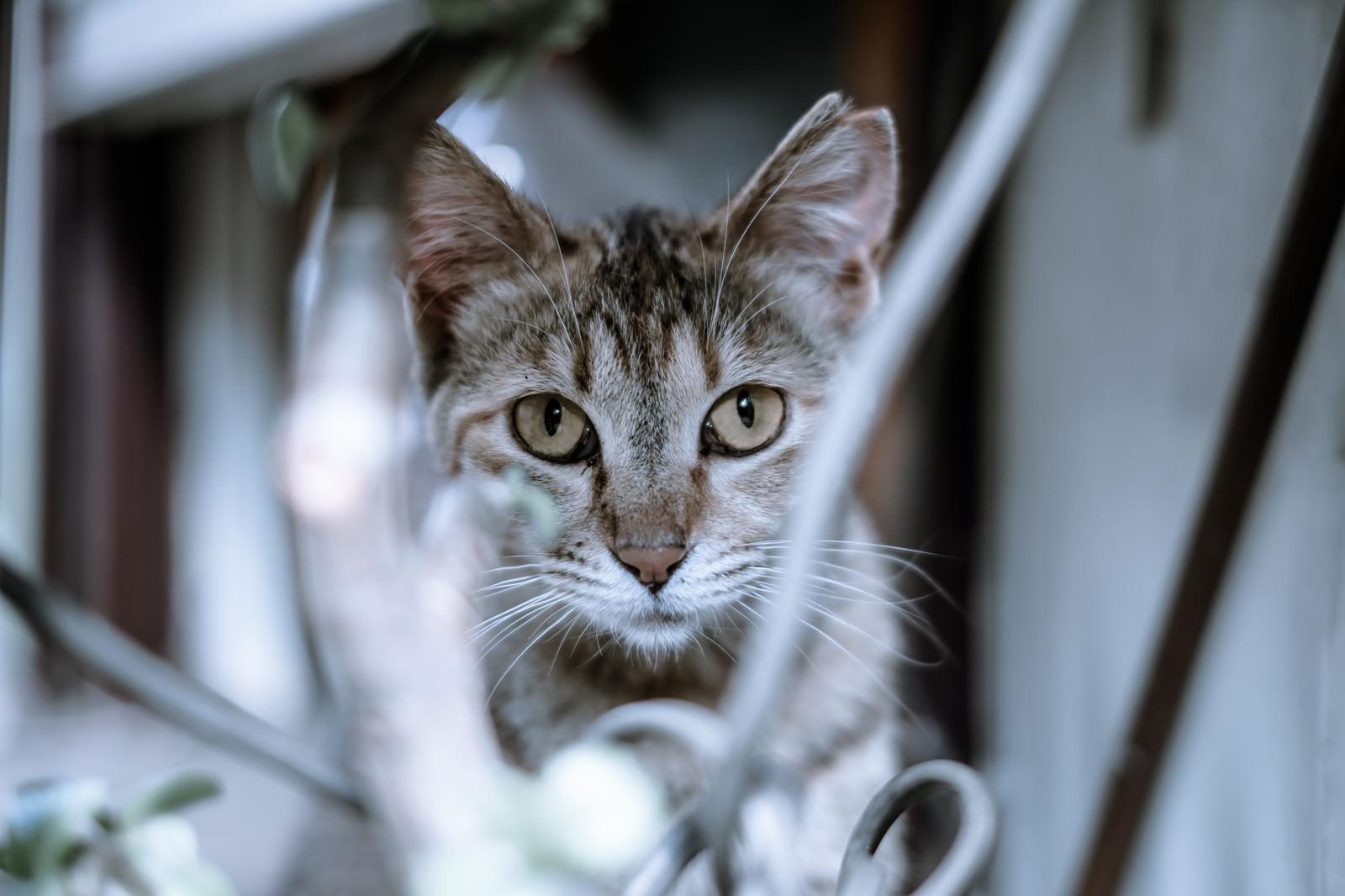 「振り向いたら猫と目があった」の写真