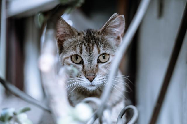 振り向いたら猫と目があったの写真