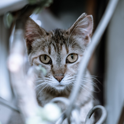 「振り向いたら猫と目があった」の写真素材
