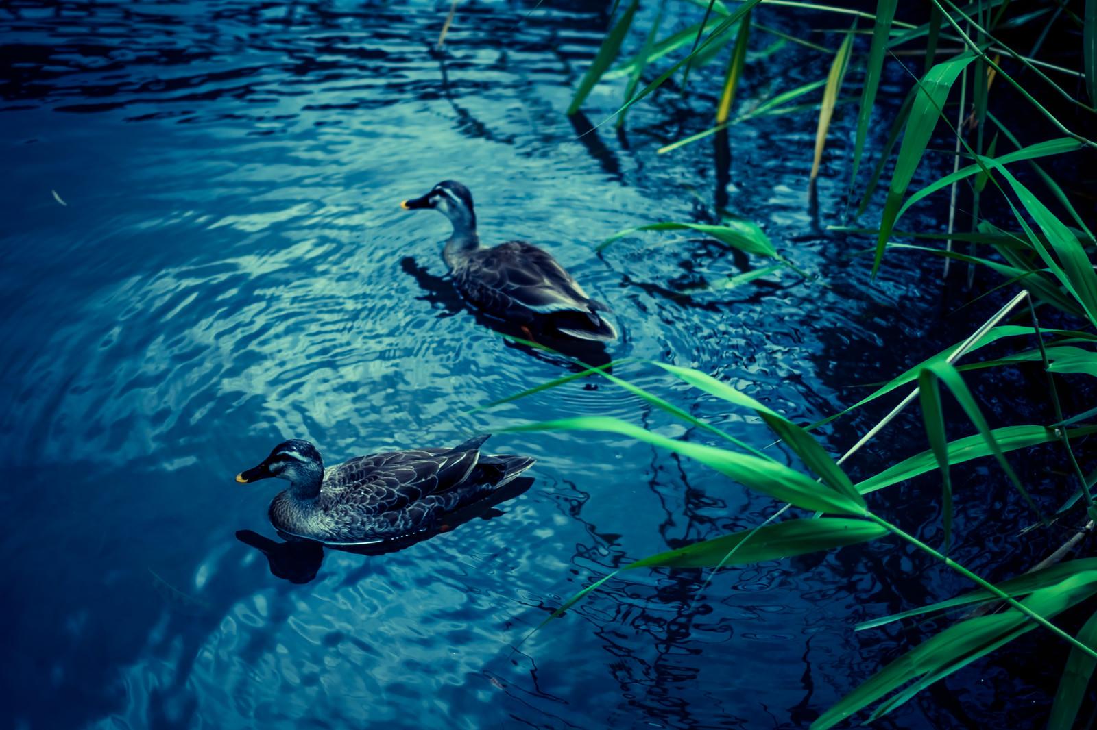「この池に事件の謎が隠されている」の写真