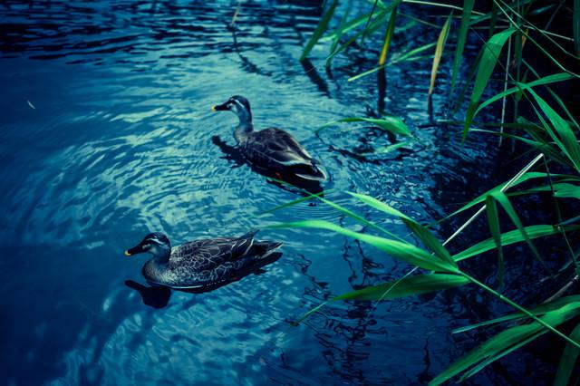 この池に事件の謎が隠されているの写真