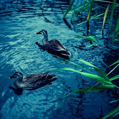 「この池に事件の謎が隠されている」の写真素材