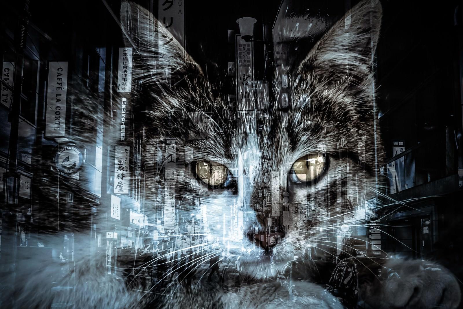 「猫と歓楽街(フォトモンタージュ)」の写真