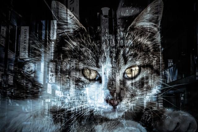 猫と歓楽街(フォトモンタージュ)の写真