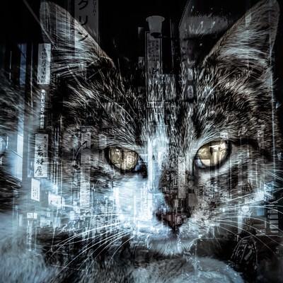 「猫と歓楽街(フォトモンタージュ)」の写真素材