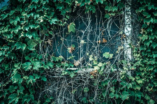 蔓が生い茂った窓の写真
