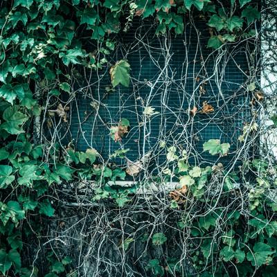 「蔓が生い茂った窓」の写真素材
