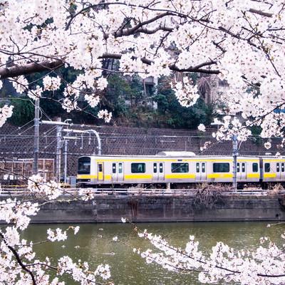 「中央線と満開の桜」の写真素材