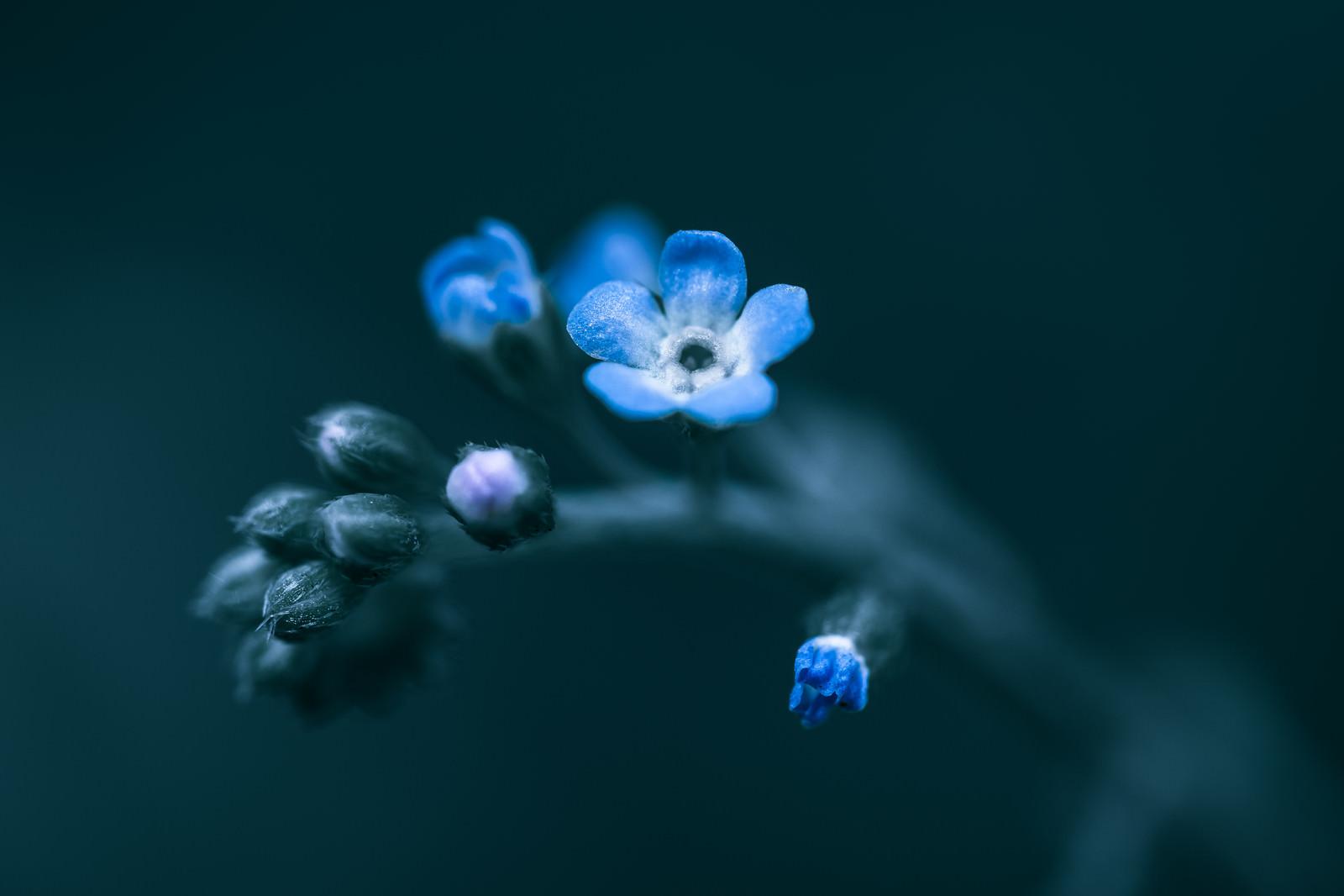 「蕾から花が咲く」の写真