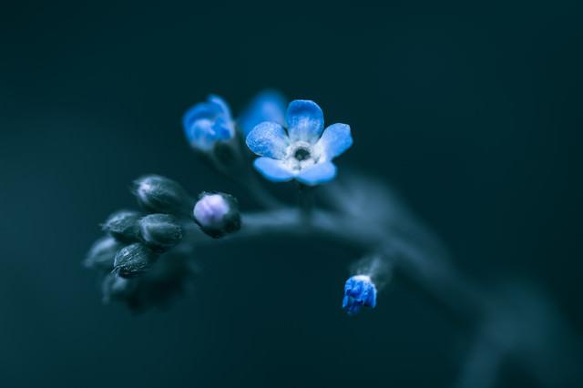 蕾から花が咲くの写真