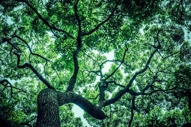 見上げた木々の写真