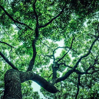 「見上げた木々」の写真素材