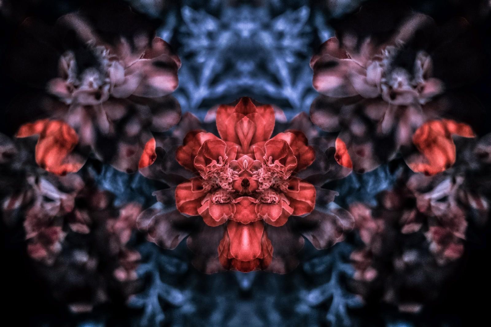 「重なる花々重なる花々」のフリー写真素材を拡大