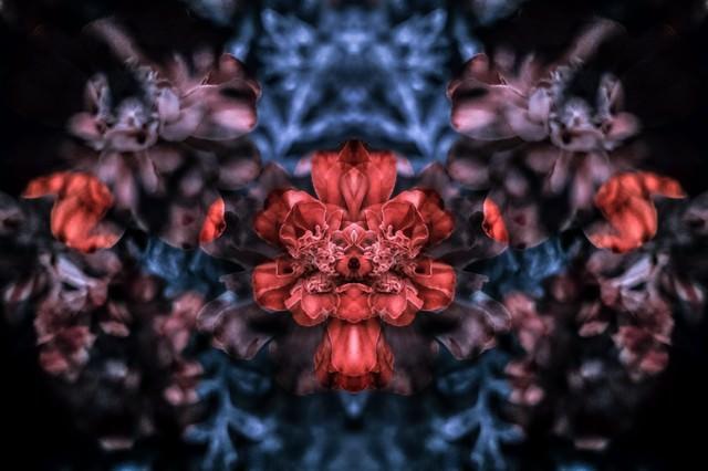 重なる花々の写真