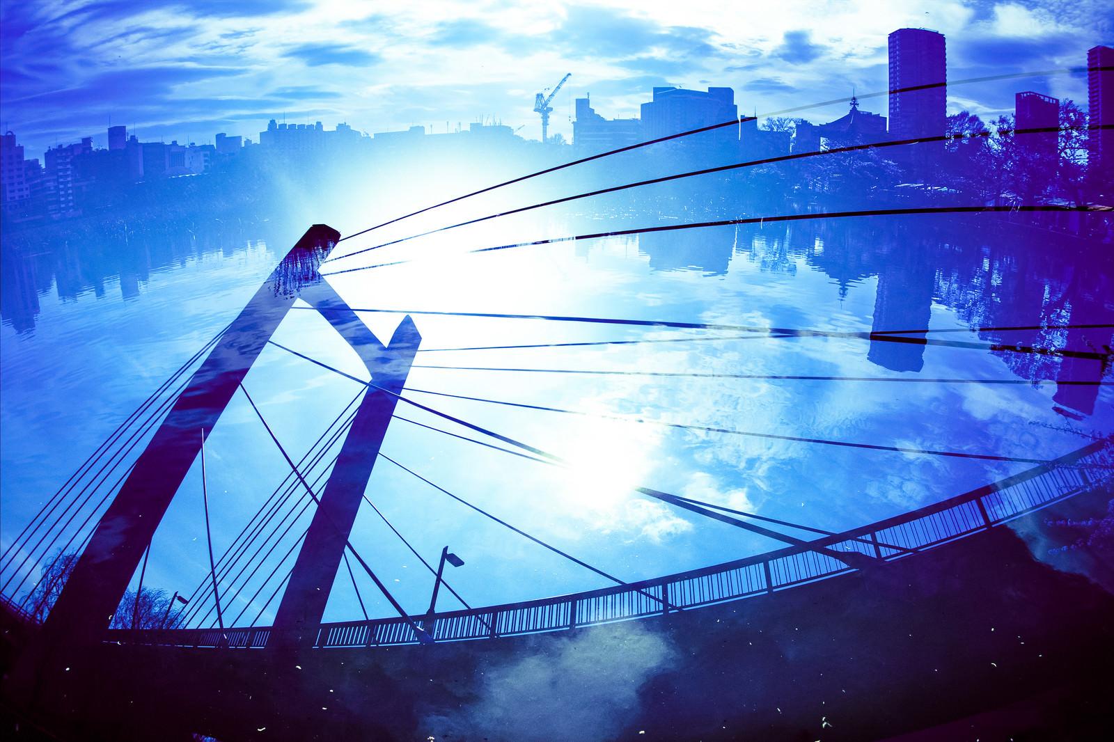 「不忍池と吊り橋」の写真