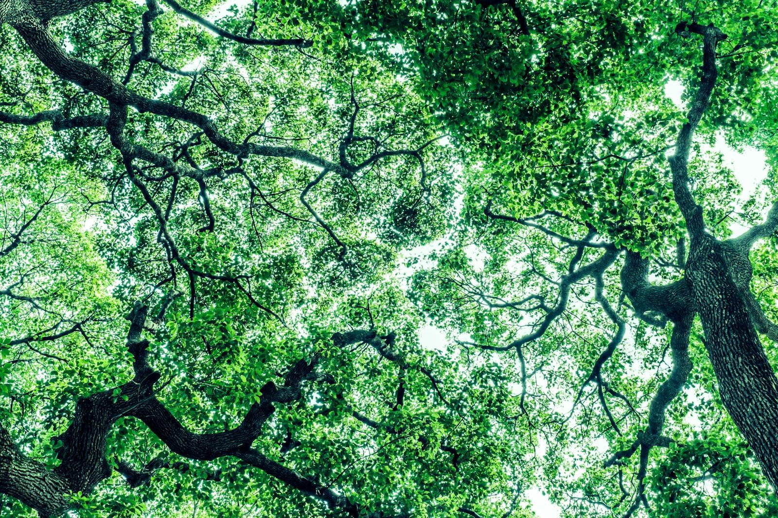 「見上げた木々(横)」の写真