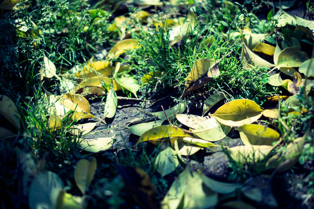 春の落ち葉の写真