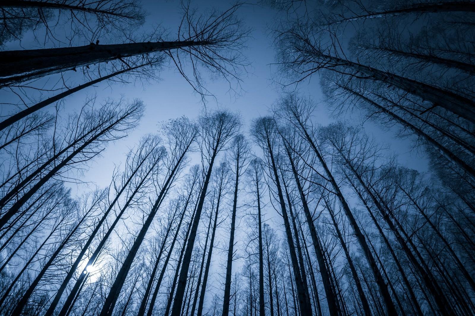 「見上げた木立」の写真