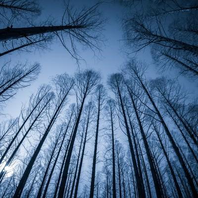 見上げた木立の写真