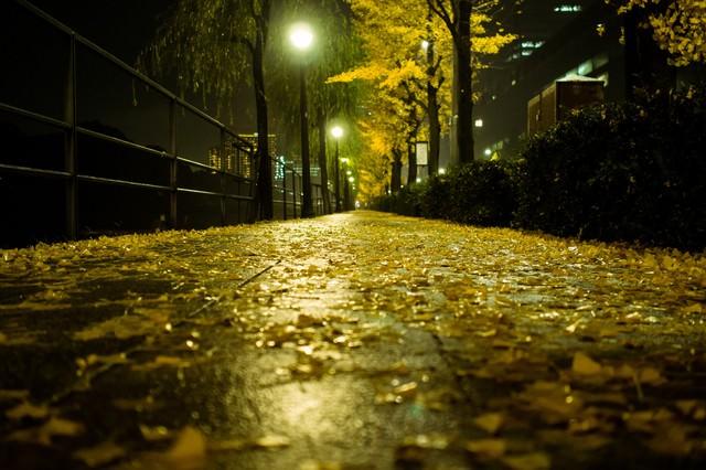 銀杏並木と落葉(夜間)の写真