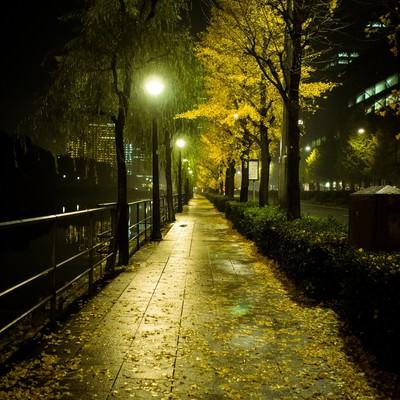 「夜の日比谷と銀杏」の写真素材