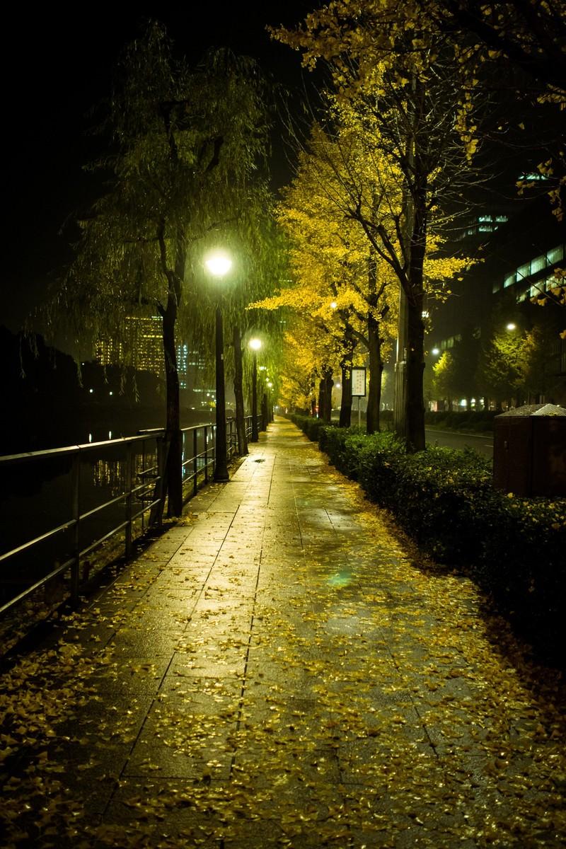 「夜の日比谷と銀杏」の写真