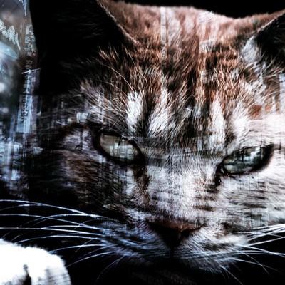 「野良猫」の写真素材